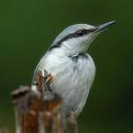 Bird 0206