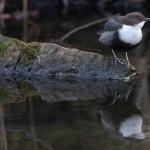 Bird 0223