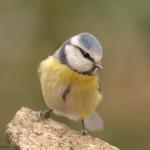 Bird 0225