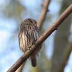 Bird 0302