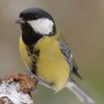 Bird 0313-2