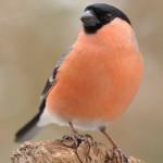 Bird 0313-3
