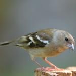 Bird 0525