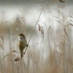 Bird 0527