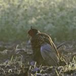 Bird 0601