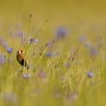 Bird 0615