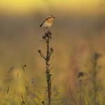 Bird 0630