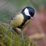 Bird 1020