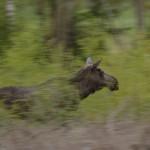 Elk 0517-2