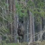 Elk 0518
