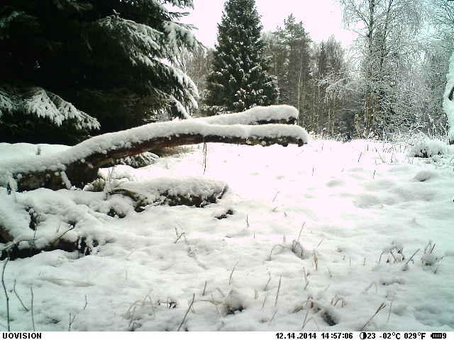2014-12-14 Sne og ingen død ræv