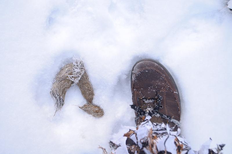 2014-12-29 Ulvespor med lort og fod