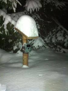 Vildtkamera i sne