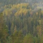 08 - 0925 - Urfugl - 01 - Bergslagen