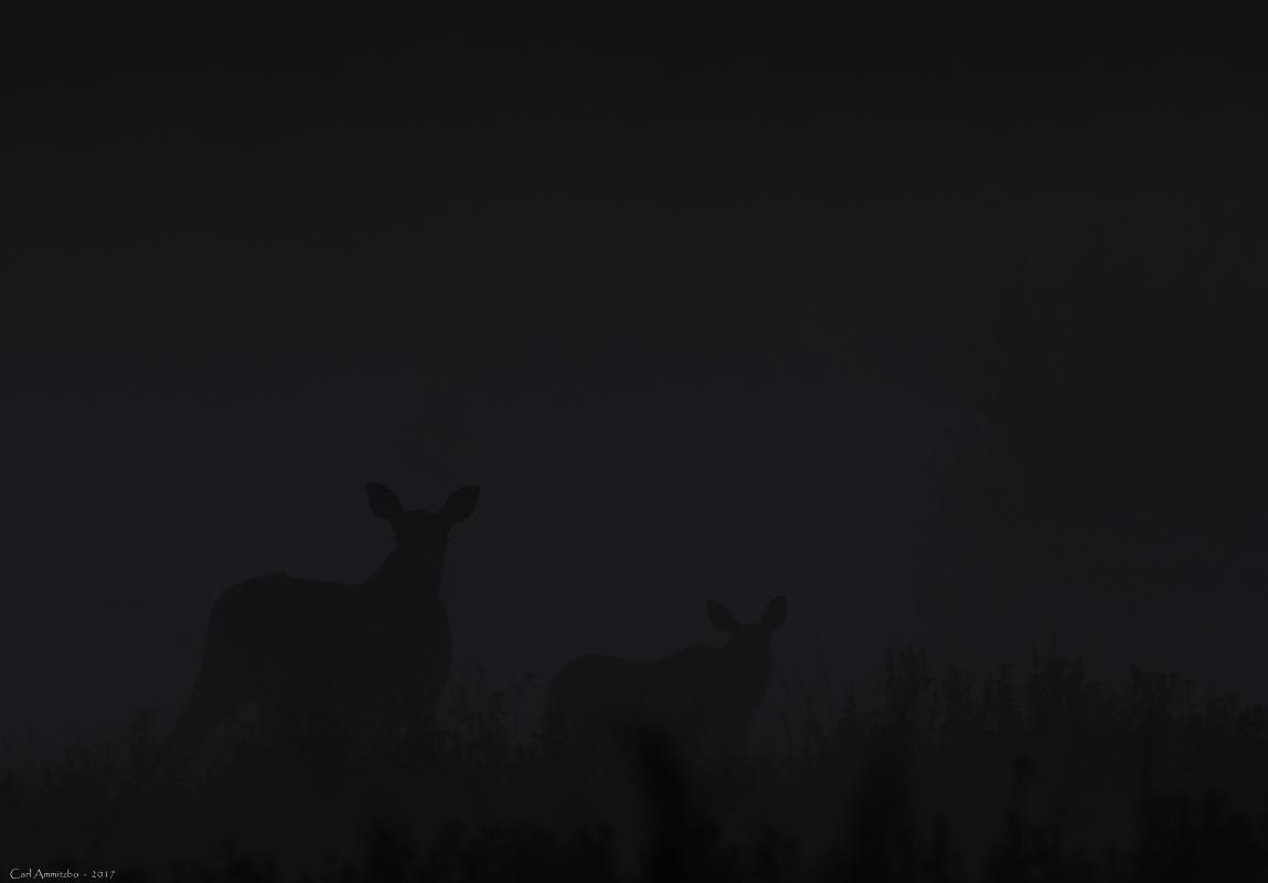 03 - 0802 - Elgko med kalv - 03 - Bergslagen (1)