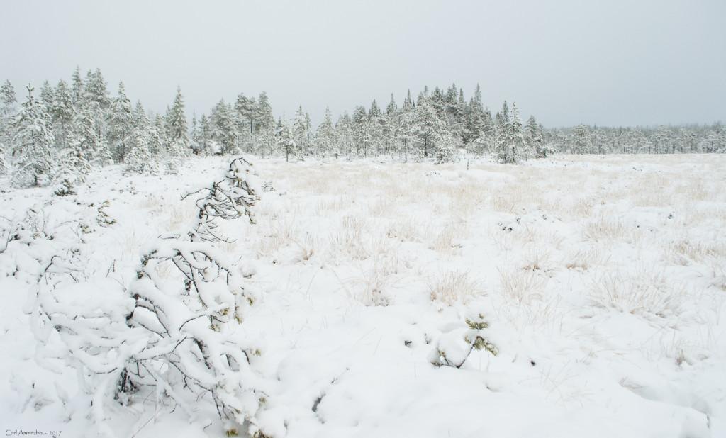 11 - 1127 - På vej til elg-søen - 01 - Bergslagen