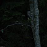 08 - 0606 - Slagugle - 95b ori - Bergslagen