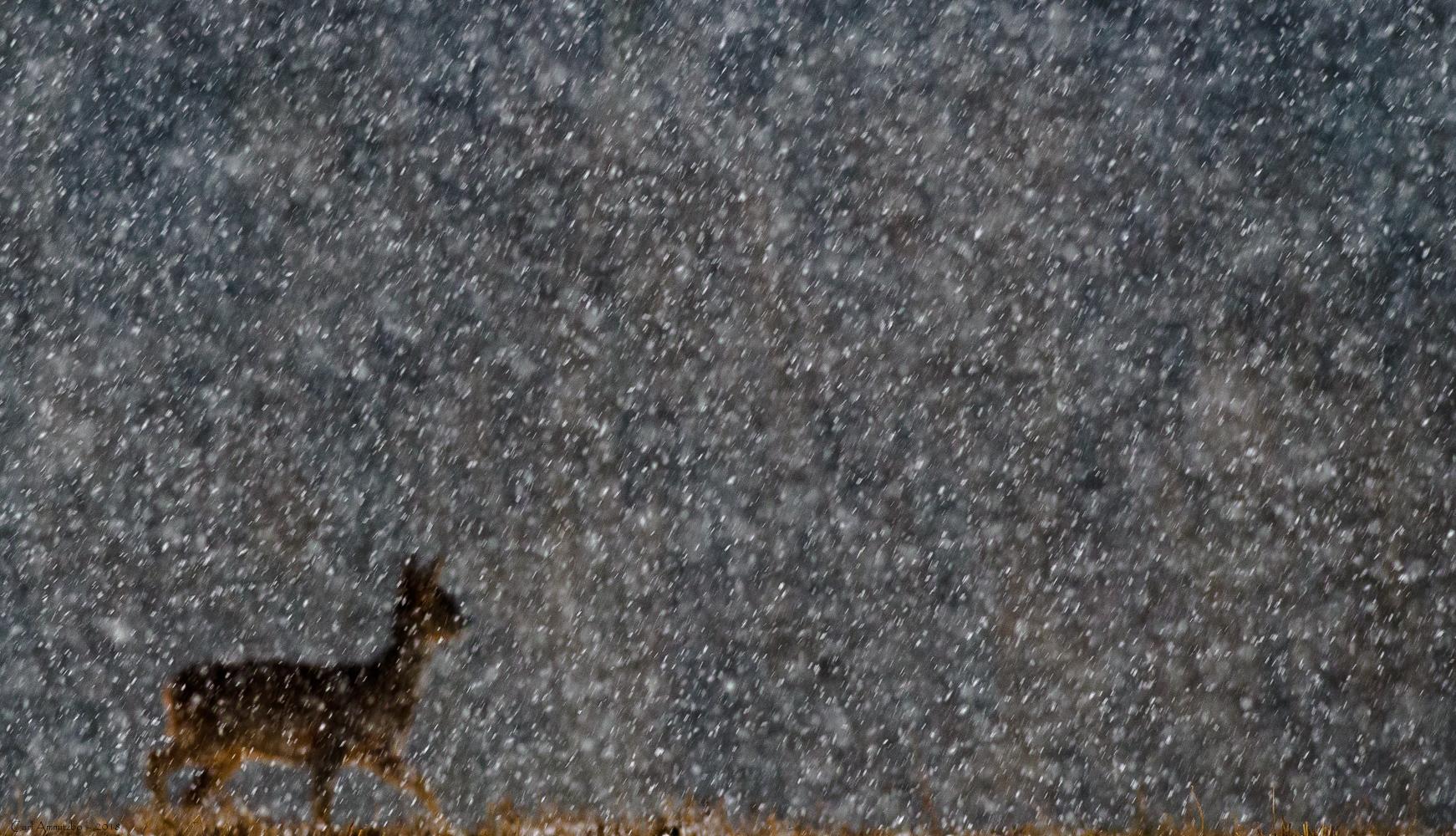 02 - 0305 - Rå i sne - 55 - Roskilde