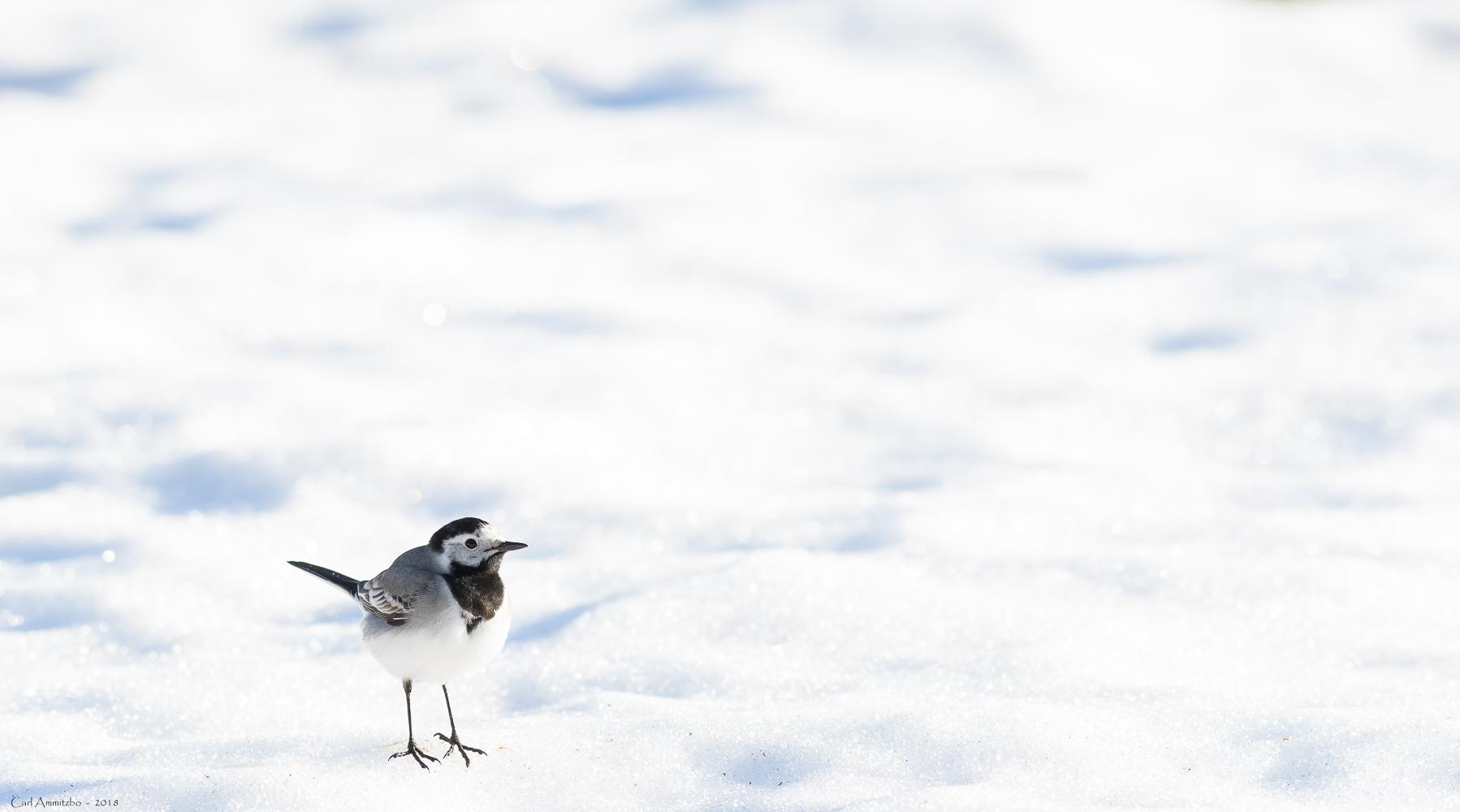 08 - 0422 - Vipstjert i sne - 01 - Bergslagen