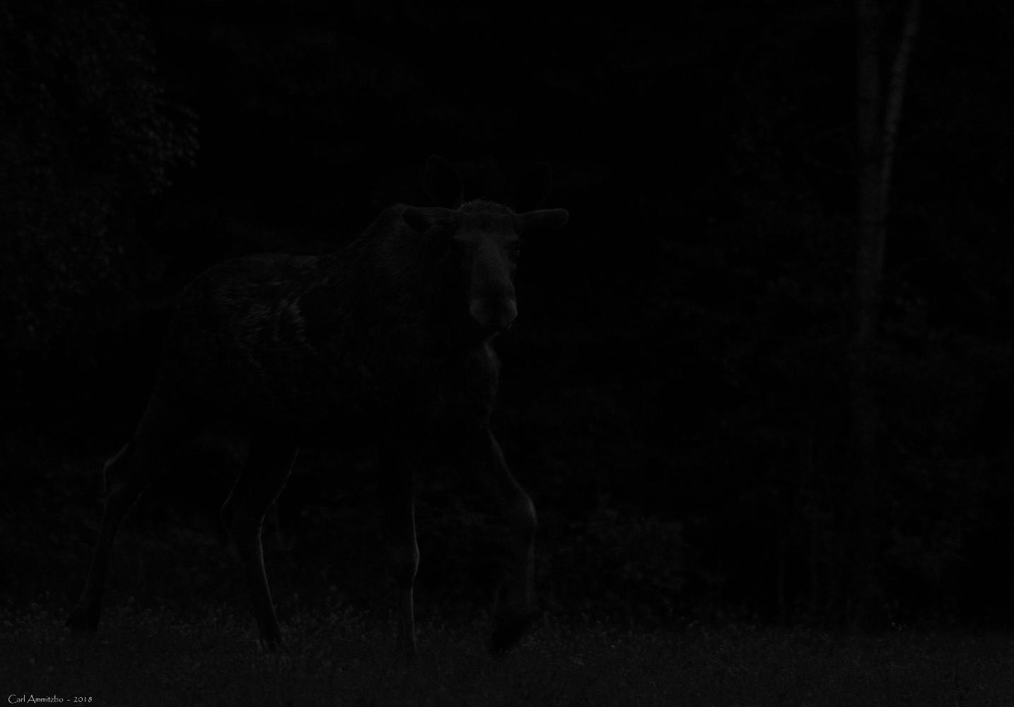 03 - 0522 - Elg i mørket - 02 - Bergslagen