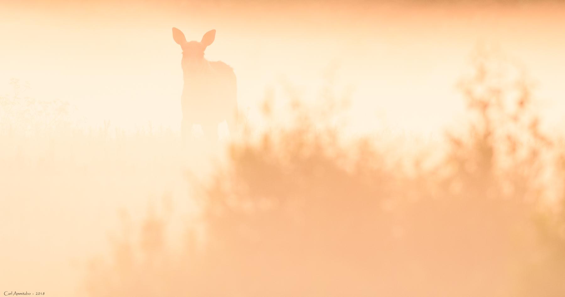 03 - 0609 - Elg i dis - 03a - Bergslagen