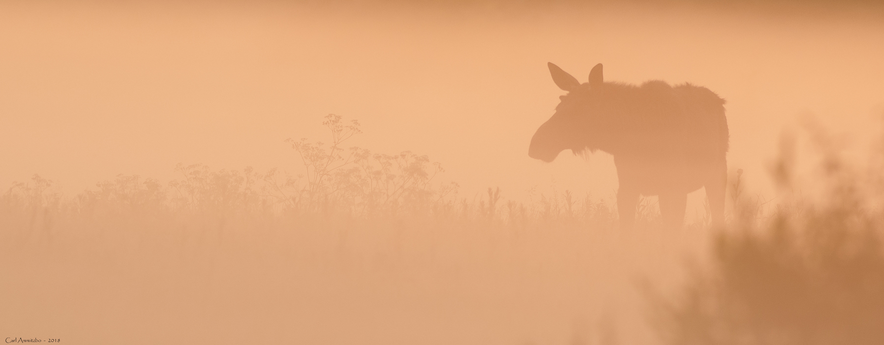 03 - 0609 - Elg i gul dis - 01 - Bergslagen