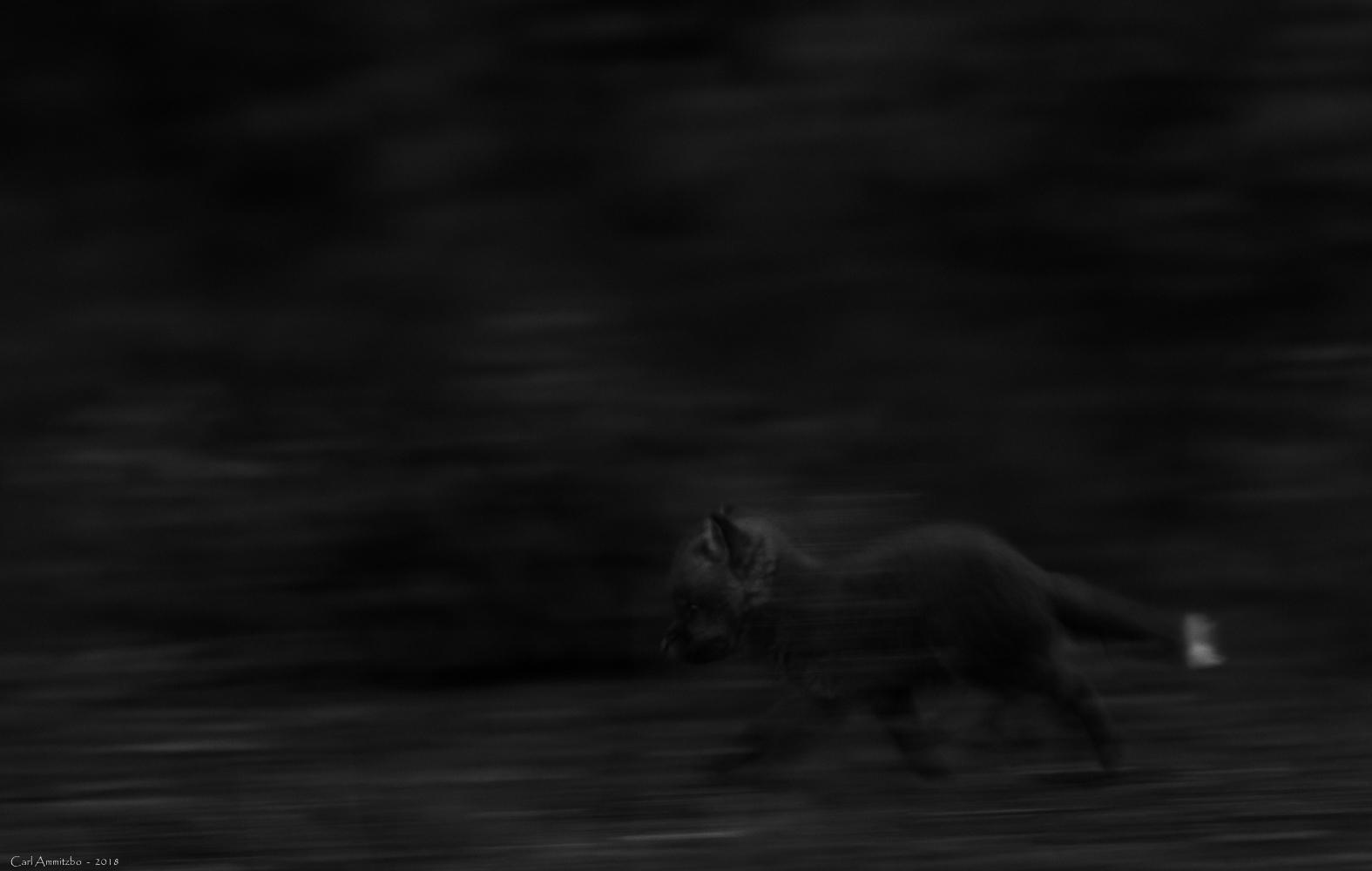 04 - 0612 - Rævehvalpe på vendeplads aften - 05sh - Bergslagen