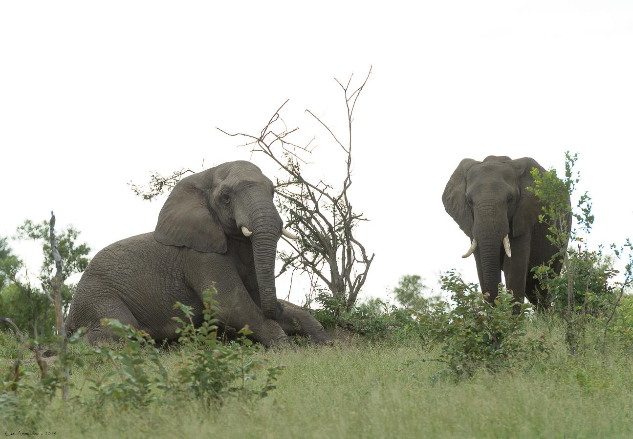07 - 0218 - Liggende elefant - 01 - Kruger