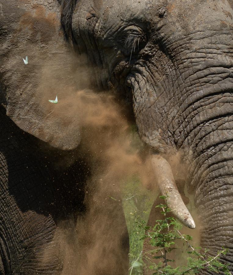 07 - 0221 - Elefant - 01 - Kruger