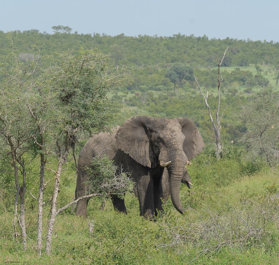 07 - 0221 - Elefant - 11 - Kruger