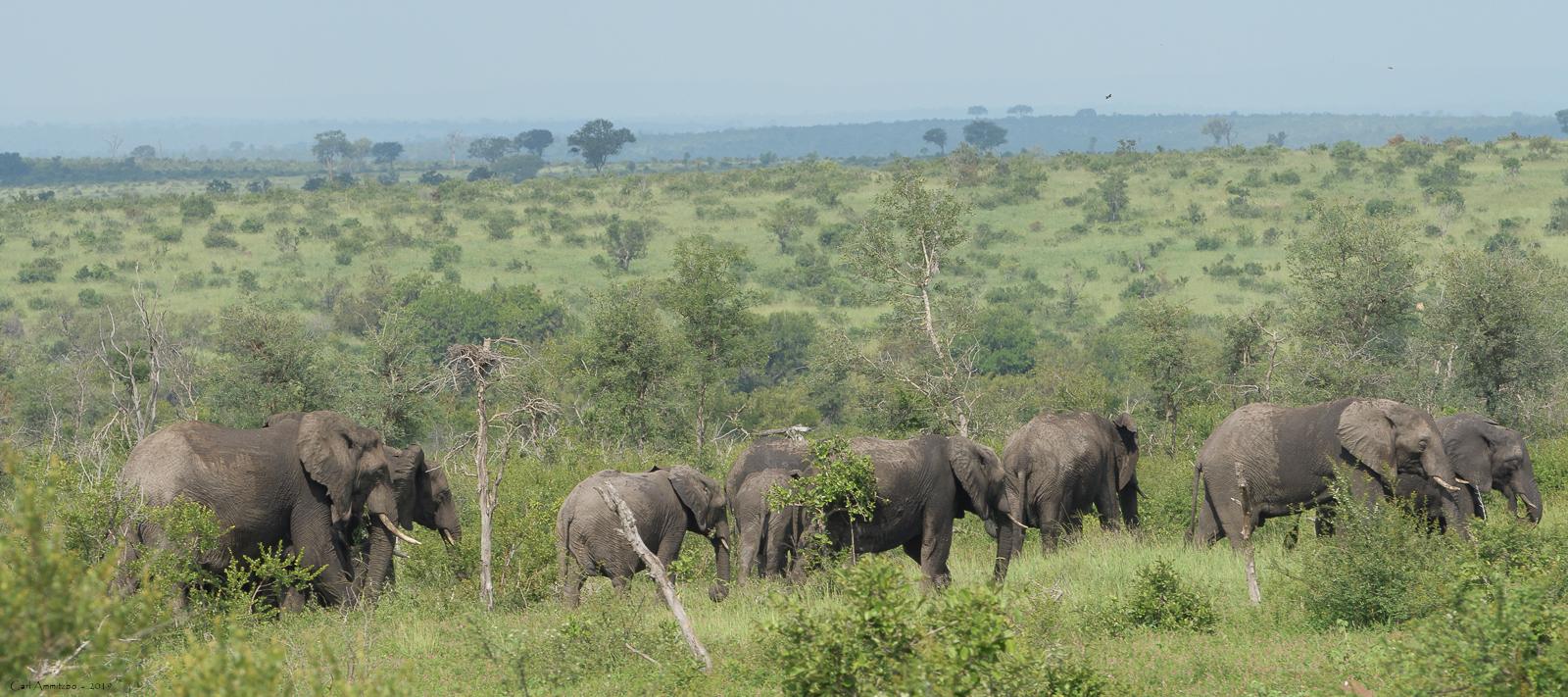 07 - 0221 - Elefant - 31 - Kruger