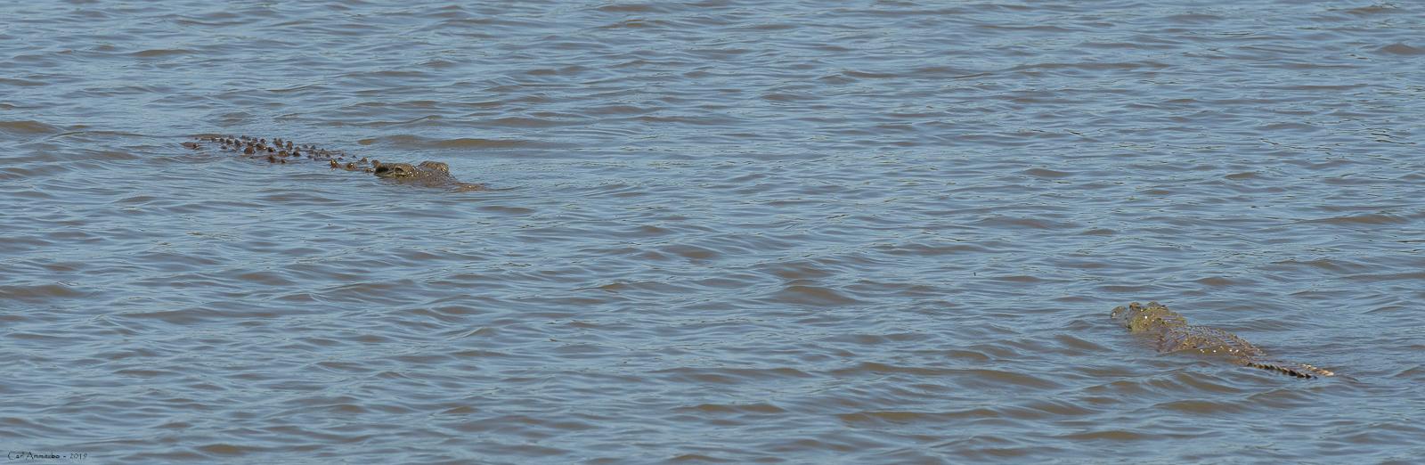 07 - 0221 - Krokodille - 01 - Kruger