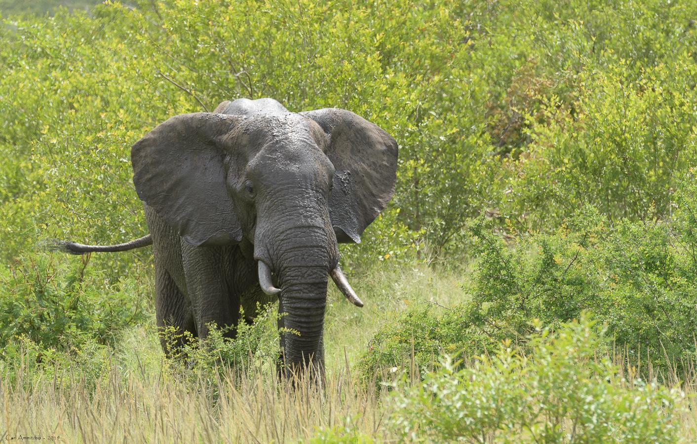 07 - 0222 - Elefant - 02 - Kruger