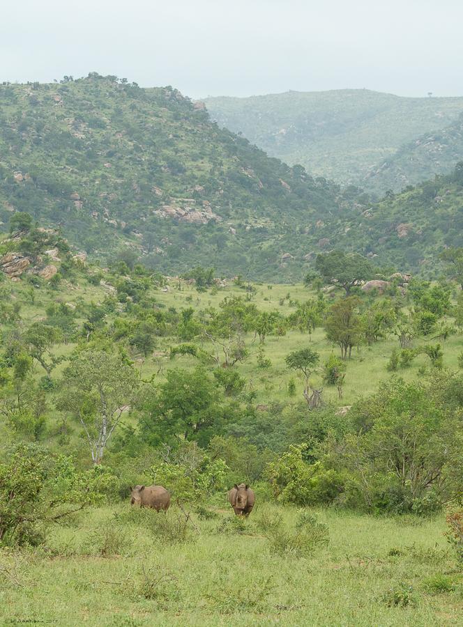 07 - 0222 - Næsehorn - 01 - Kruger
