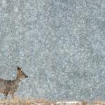 02 - 0305 - Rå i sne - 58 - Roskilde-1 - Kopi