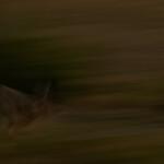05 - 0702 - Hare - 01 - Roskilde