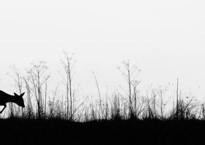 02 - 0122 - Rådyr - 01 - Taastrup