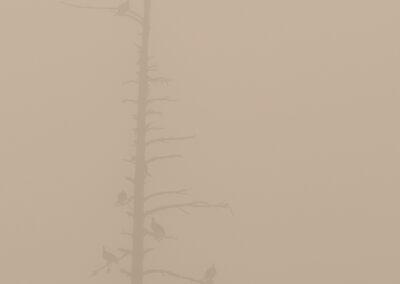 08 - 0919 - Urfugle i tåge - 02 - Bottenbo_